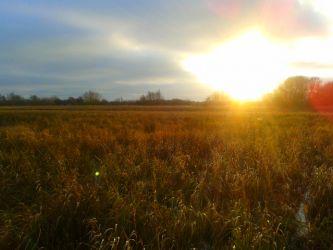 The meadows, Jan 2013
